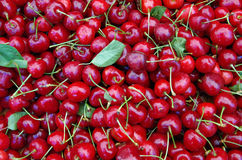 Cherries with stems and leaves Royalty Free Stock Images