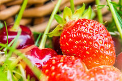 Cherries and strawberries laying on green grass Stock Images