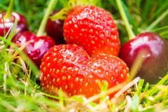 Cherries and strawberries laying on green grass Stock Photography