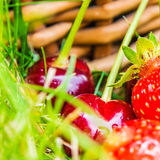 Cherries and strawberries laying on green grass Royalty Free Stock Image