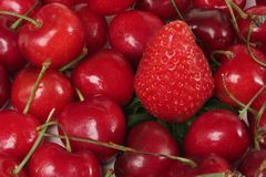 Cherries and Strawberry. Color red fruits of cherries and a strawberry so a white background Stock Image