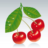 Cherries. Three red fresh cherries with leaves Royalty Free Stock Photo