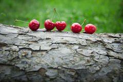 Cherries on a tree bark Royalty Free Stock Photography