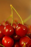 Cherries. Two sweet cherries close-up royalty free stock photo