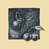 Cherries. Vector  illustration of a cherries  stylized as engraving Royalty Free Stock Images