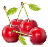 Cherries with water drops. Royalty Free Stock Photo