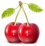 Cherries with water drops. Vector. Cherries with water drops Stock Image