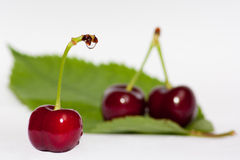 Red cherries with water drops, on a green leaf, wi. A red cherry with water drops in foreground with a couple of cherries on a green leaf in the background Stock Photos