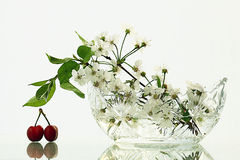 Cherries on a white background Stock Photography