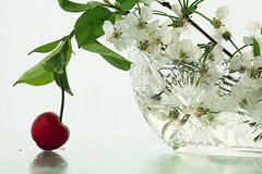 Cherries on a white background Stock Photos