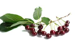 Cherries on a White Background Stock Image
