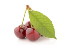 Cherries on a white background. Fresh and healthy cherries on a white background Stock Photography