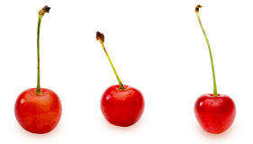 Cherries in a white background Stock Photo