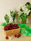 Cherries in a wicker basket Royalty Free Stock Photos