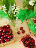 Cherries in a wicker basket, bouquet of lily of the valley and a handful of cherries in female hands Royalty Free Stock Photo