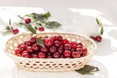 Cherries in  wicker basket on white background. Red berry. Still life Royalty Free Stock Photo