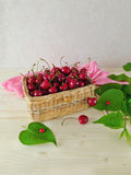 Cherries in a wicker basket Royalty Free Stock Photography