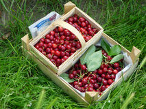 Cherries in Wooden Baskets Stock Photos