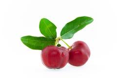 cherry świeże Zdjęcie Royalty Free