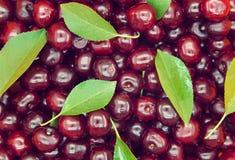 cherry świeże słodkie Lato dojrzałe owoc Weganin żywności organicznej klepnięcie Fotografia Royalty Free