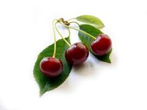 Cherry. Three berries on a branch with leaves and shadows Stock Images