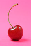 Cherry. On a pink background Royalty Free Stock Photo
