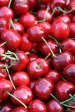 Cherry Royaltyfria Foton