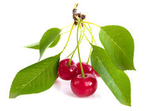 Cherry. On a white background Royalty Free Stock Photo