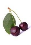 Cherry   Arkivfoton
