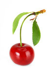 Cherry. On white background ripe fruit Stock Photography