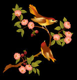 Cherry. Flowering branch of sakura.Pink beautiful flowers and two bright bird on a branch.An illustration is divided into layers on a black background Stock Image