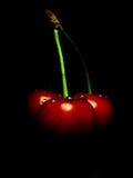 Cherry 2 Royaltyfria Bilder