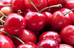 Cherry fotografering för bildbyråer