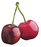 Cherry. Twin cherry Stock Photography