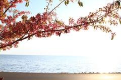 Cherry. Beautiful Cherry in the seaside Stock Photo