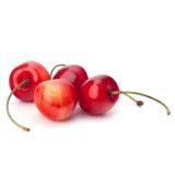 Cherry royaltyfria bilder