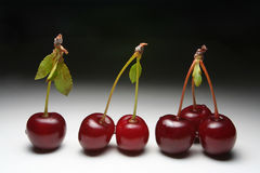 Cherry Royaltyfri Foto