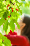 Cherry. Young cute cacausian woman picking up cherry fruit from blossoming tree Stock Photos