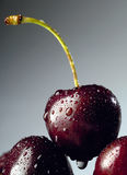 Cherry. Fresh cherry stock images