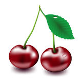 Cherry. Vector cherry on white background Stock Image