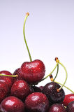 Cherry. Fresh cherry with drops on background stock images
