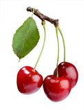 Cherry Stock Photos