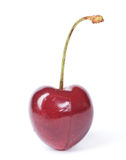 cherry Obraz Royalty Free