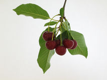 Cherry. Bowl of cherries Stock Images