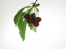 Cherry. Bowl of cherries Royalty Free Stock Image