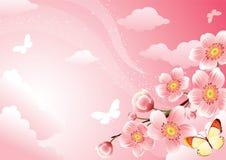 Cherry. Vector illustration - Cherry blossom background