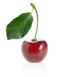 Cherry. Stock Images