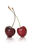Cherry. Royalty Free Stock Photography