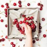 Cherry abundance, agriculture background. Ripe berry. stock photo