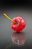 Cherry against black background. Perfect ripen cherry with water drops on it against black background Royalty Free Stock Photo
